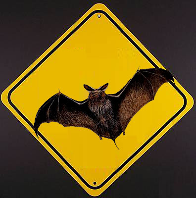 Bat Tested Positive for Rabies
