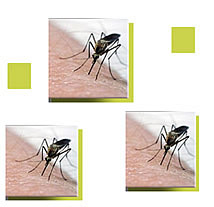 west nile virus numbers continue to rise